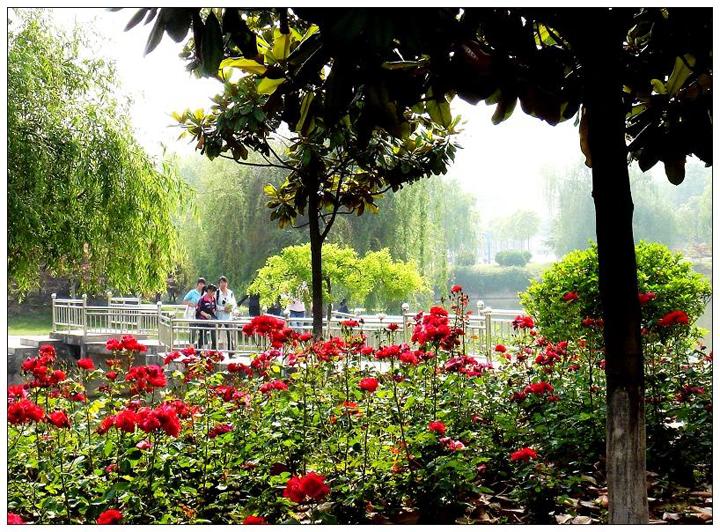 滁州学院百花齐放春意盎然的校园小道