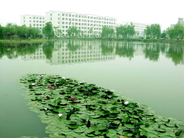 滁州学院莲花池